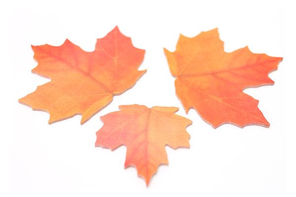 B.B.Begonia Leaf-it Memo Note Set (20 Sheets / Leaf) - Maple - Red - C209RL003S