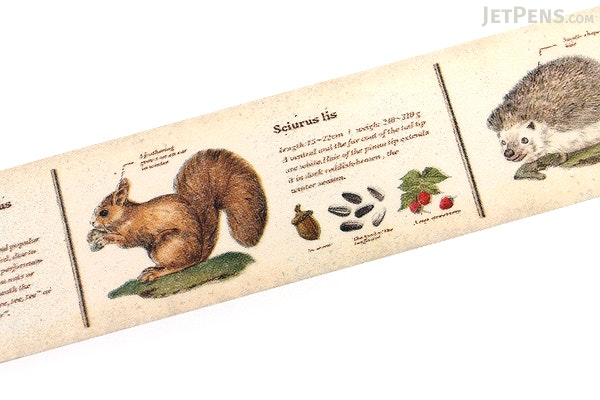 MT Ex Washi Tape - Encyclopedia Animal - 30 mm x 10 m - MT MTEX1P36