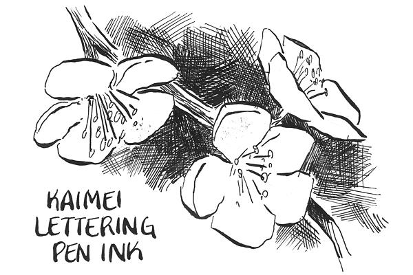 Kaimei Lettering Pen Ink - 30 ml Bottle - KAIMEI SE-0021
