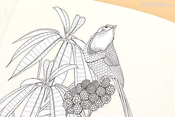 Birdtopia Coloring Book - Daisy Fletcher - LAURENCE KING 9781780677552